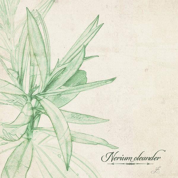Nerium Oleander Poster