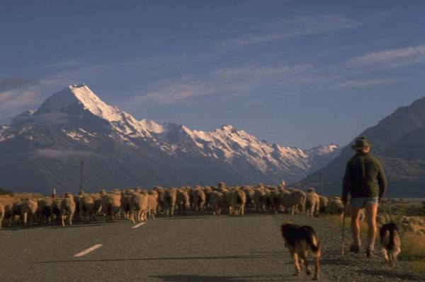 Poster featuring the photograph New Zealand Mt Cook by Travel Pics