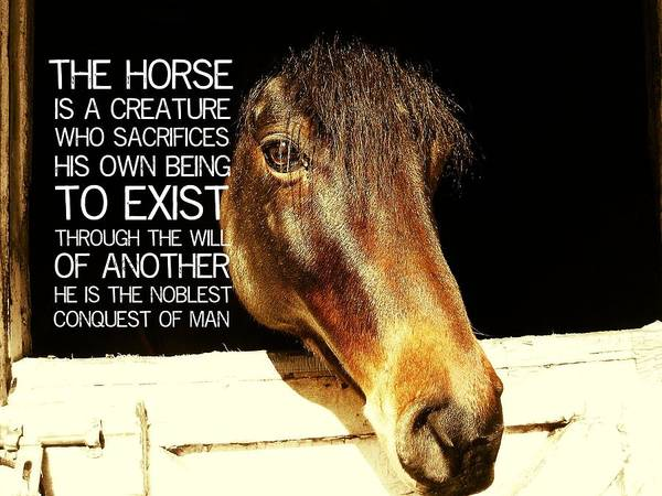 Noble Stallion Quote Poster