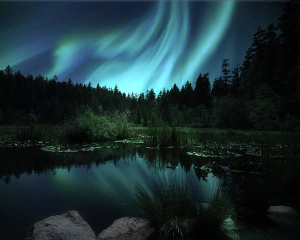 Poster featuring the photograph Northern Lights Over Lily Pond by Gigi Ebert