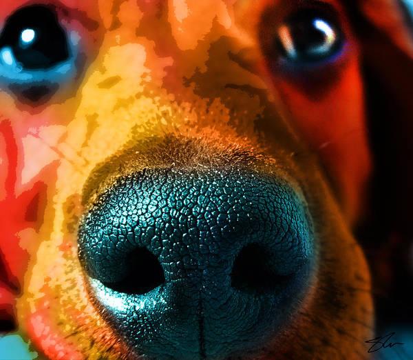 Nosy Poster