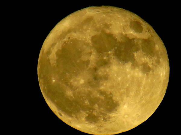 November Full Moon Poster