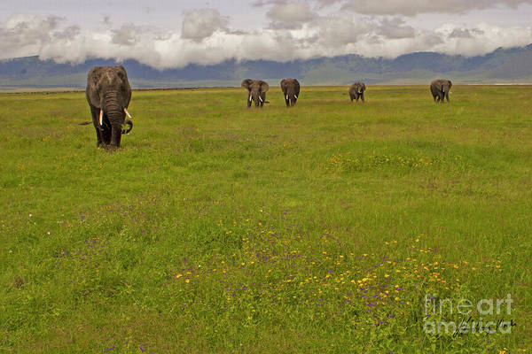 Nrongoro Crater-signed-#0141 Poster