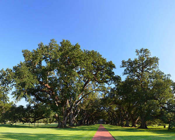 Oak Alley Plantation Panoramic Poster