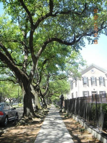 Oak-lined Sidewalk Poster