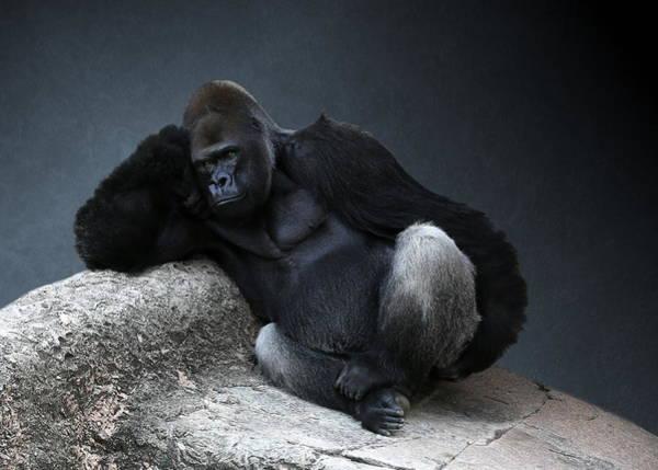 Off Duty Gorilla Poster