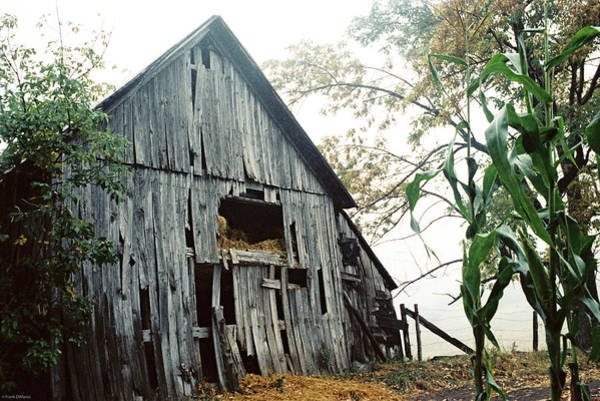 Old Barn In The Morning Mist Poster