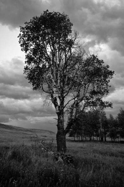 Old Tree, Lost Trail Wildlife Refuge Poster