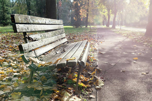 Rustic Wooden Bench During Late Autumn Season On Bright Day Poster
