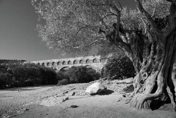 Olive Tree And Pont Du Gard, France Poster