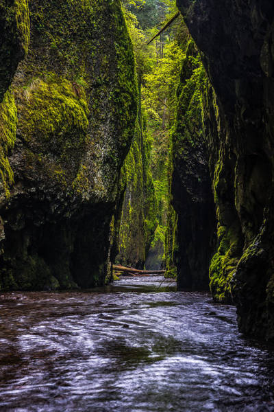 Oneonta Gorge Poster