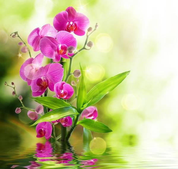 Orchidaceae Poster