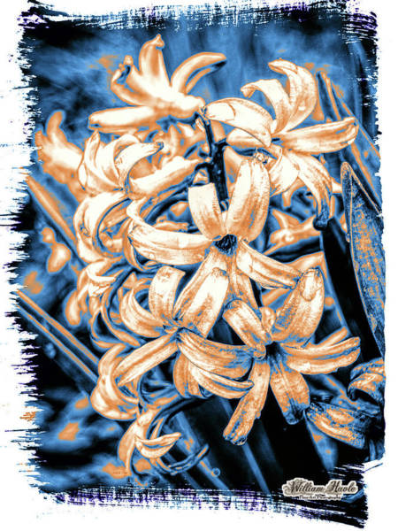 Poster featuring the digital art Painted Hyacinth by William Havle