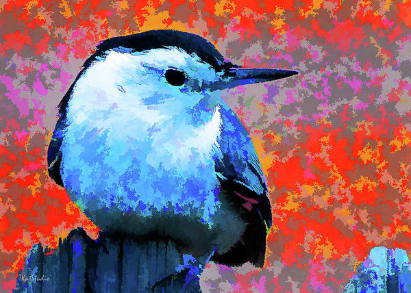 Painted White Breasted Nuthatch Poster