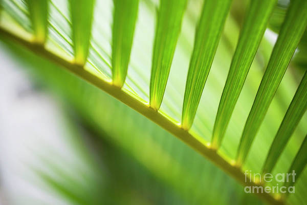 Palm Greenery Poster