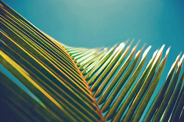Palm Leaves In The Sun Poster