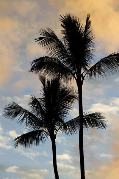 Palm Tree Sunset Hawaii Poster
