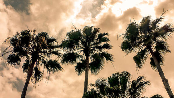 Palms Against The Sky Poster