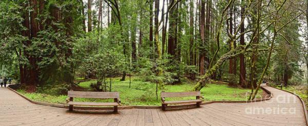 Panorama Of Muir Woods National Monument Boardwalk - Marin County California Poster