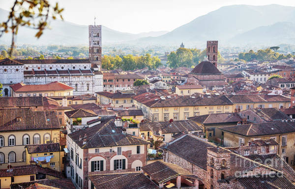 panorama of old town Lucca, Italy Poster