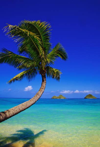 Paradise Palm Over Lanikai Poster