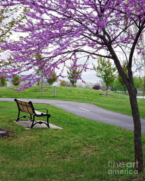 Poster featuring the photograph Park Bench With Redbud Tree Winona Mn By Yearous by Kari Yearous