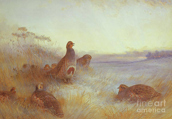 Partridges In Early Morning Poster