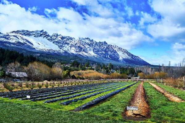 Landscape With Mountains And Farmlands In The Argentine Patagonia Poster