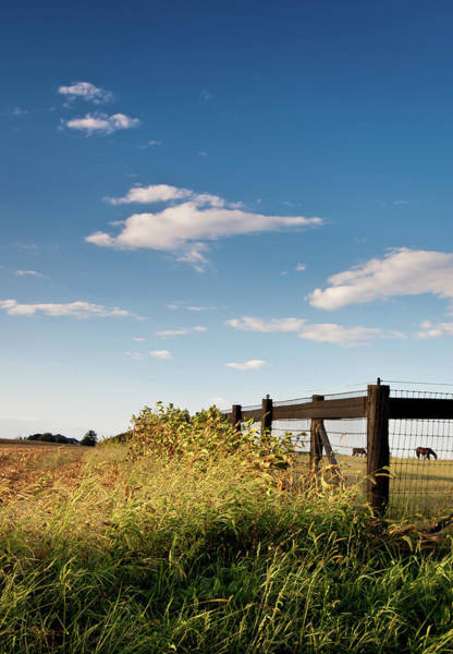 Peaceful Grazing Poster