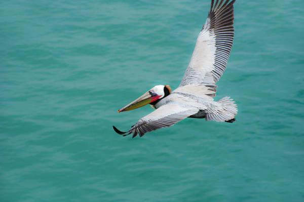 Pelican Beautiful Poster
