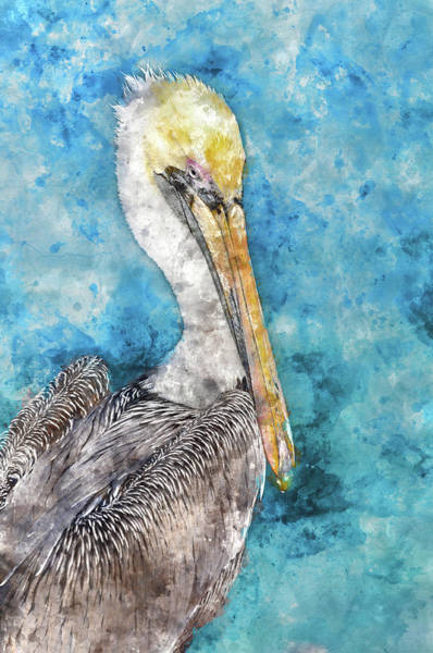 Pelican With Blue Ocean Background Poster