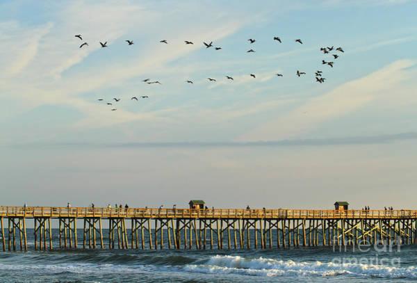 Pelicans At Flagler Beach Poster