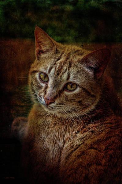 Pets Fat Cat Portrait 2 Poster