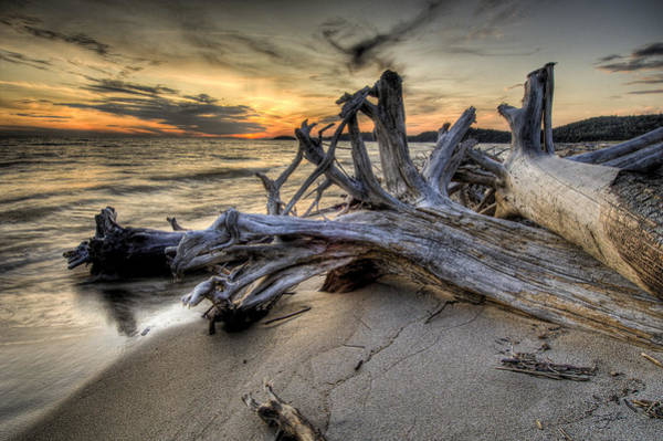 Pic Driftwood Poster