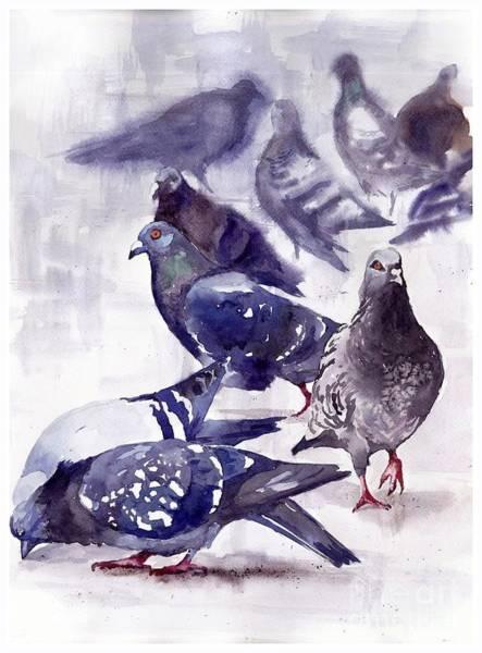 Pigeons Watercolor Poster