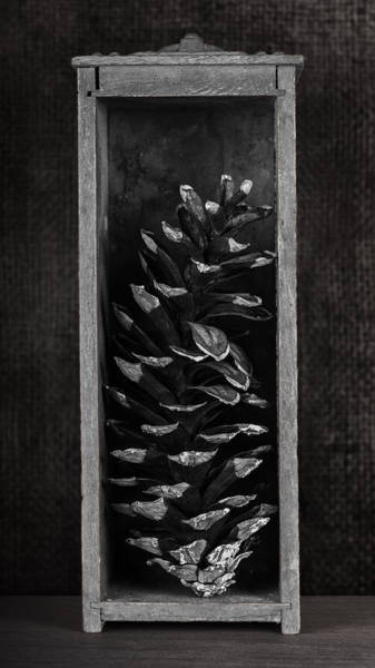 Pine Cone In A Box Still Life Poster