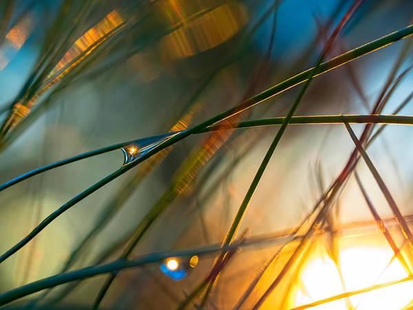 Pine Needle Sunset Poster
