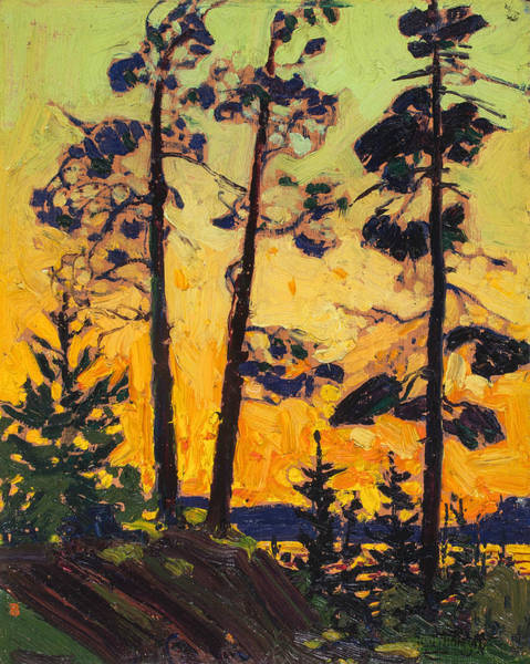 Pine Trees At Sunset Poster