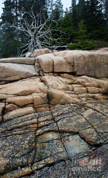 Pink Granite And Driftwood At Schoodic Peninsula In Maine  -4672 Poster