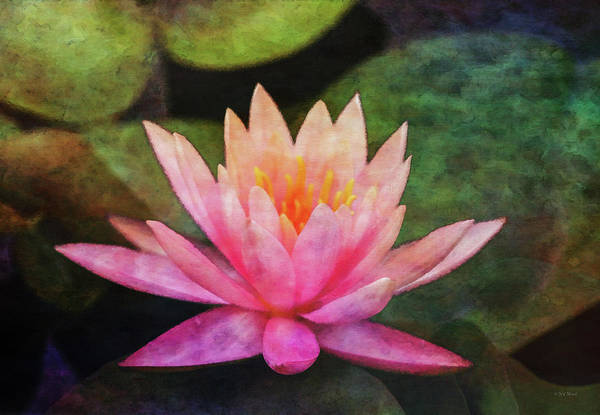 Pink Lotus 4134 Idp_2 Poster