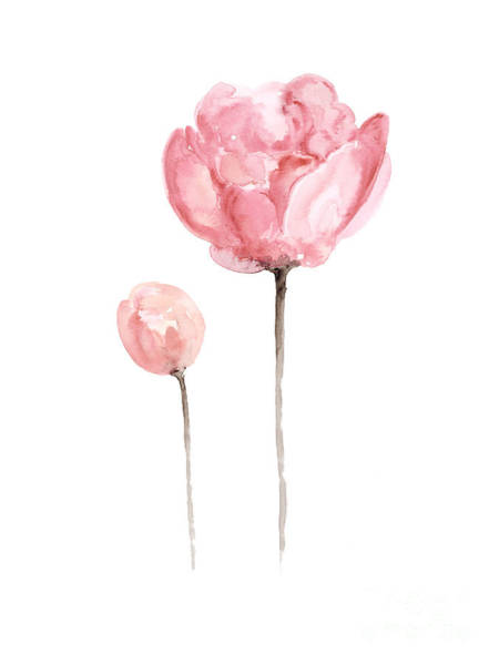 Pink Peonies Watercolor Painting Poster