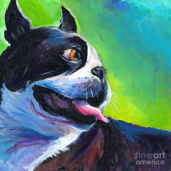 Playful Boston Terrier Poster