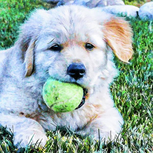 Playful Pup Poster