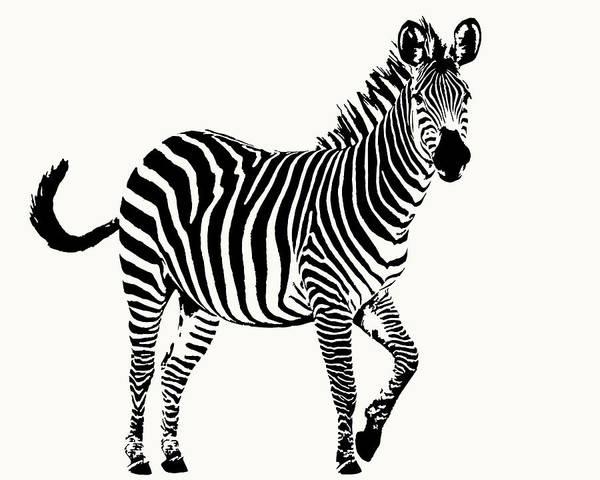 Playful Zebra Full Figure Poster