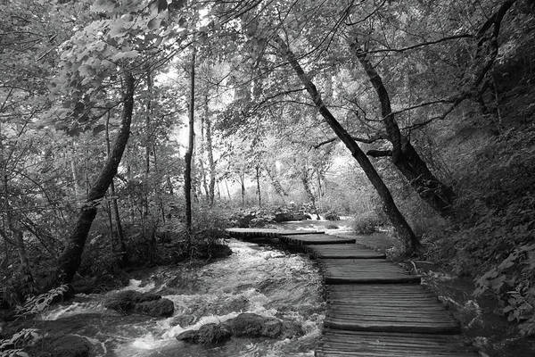 Poster featuring the photograph Plitvice In Black And White by Travel Pics