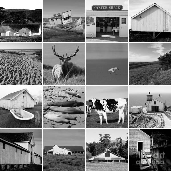 Point Reyes National Seashore 20150102 Bw Poster