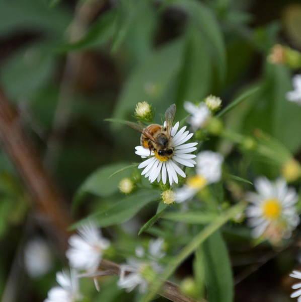 Pollinatin' Poster