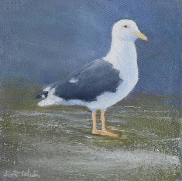 Portrait Of A Seagull Poster