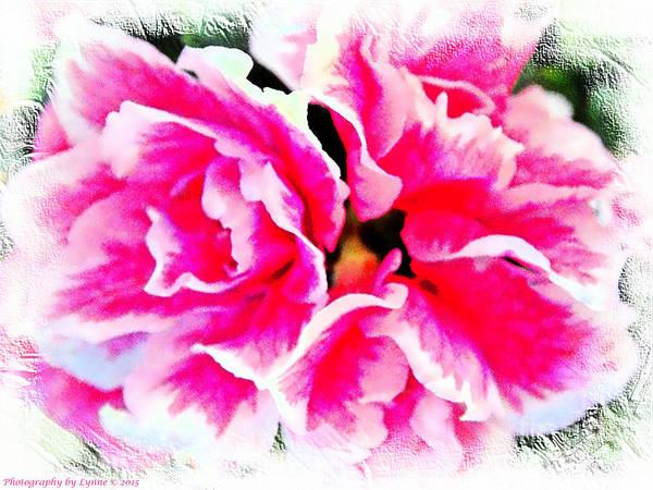 Pretty Pink  Azaleas Poster