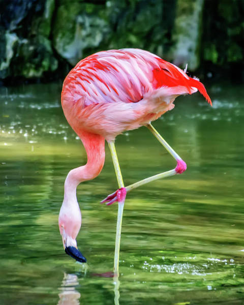 Pretty Pink Flamingo Poster
